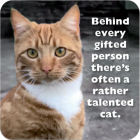 Buy Cath Tate Photocaptions Coasters Talented Cat Coaster at Louis Potts