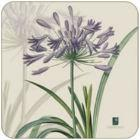 Buy Pimpernel Fruits and Floral RHS Agapanthus Coasters Set of 6 at Louis Potts