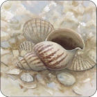 Buy Pimpernel Scenic and Decorative Beach Prize Coasters Set of 6 at Louis Potts