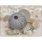 Buy Pimpernel Scenic and Decorative Beach Prize Placemats Set of 6 at Louis Potts