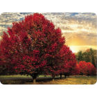 Buy Pimpernel Scenic and Decorative Crimson Trees Placemats Set of 4 at Louis Potts