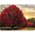 Buy Pimpernel Scenic and Decorative Crimson Trees Placemats Set of 6 at Louis Potts