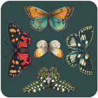 Buy Portmeirion Botanic Garden Harmony Coaster Set of 6 Harmony at Louis Potts