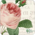 Royal Worcester RHS Roses Coasters Set of 6