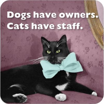Cath Tate Photocaptions Coasters Cats Have Staff Coaster