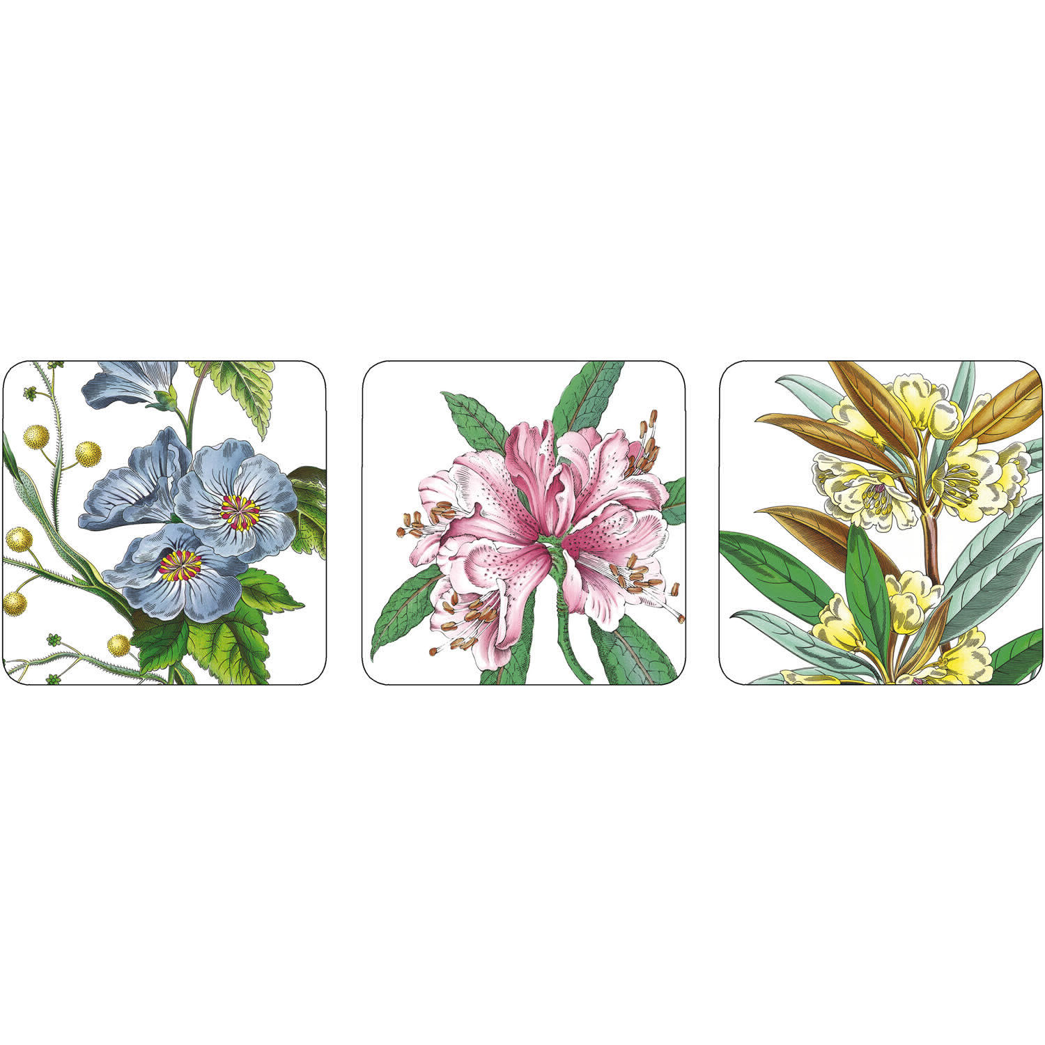 Pimpernel Fruits And Floral Stafford Blooms Coasters Set Of 6 Louis Potts