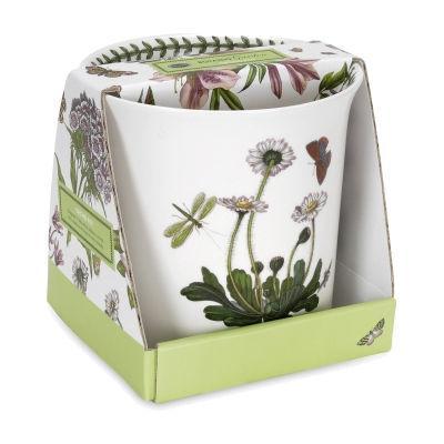 Portmeirion Botanic Garden Orchid Pot
